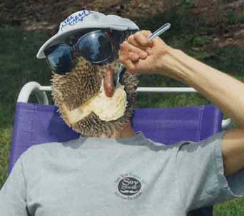 Man w/durian head eating durian